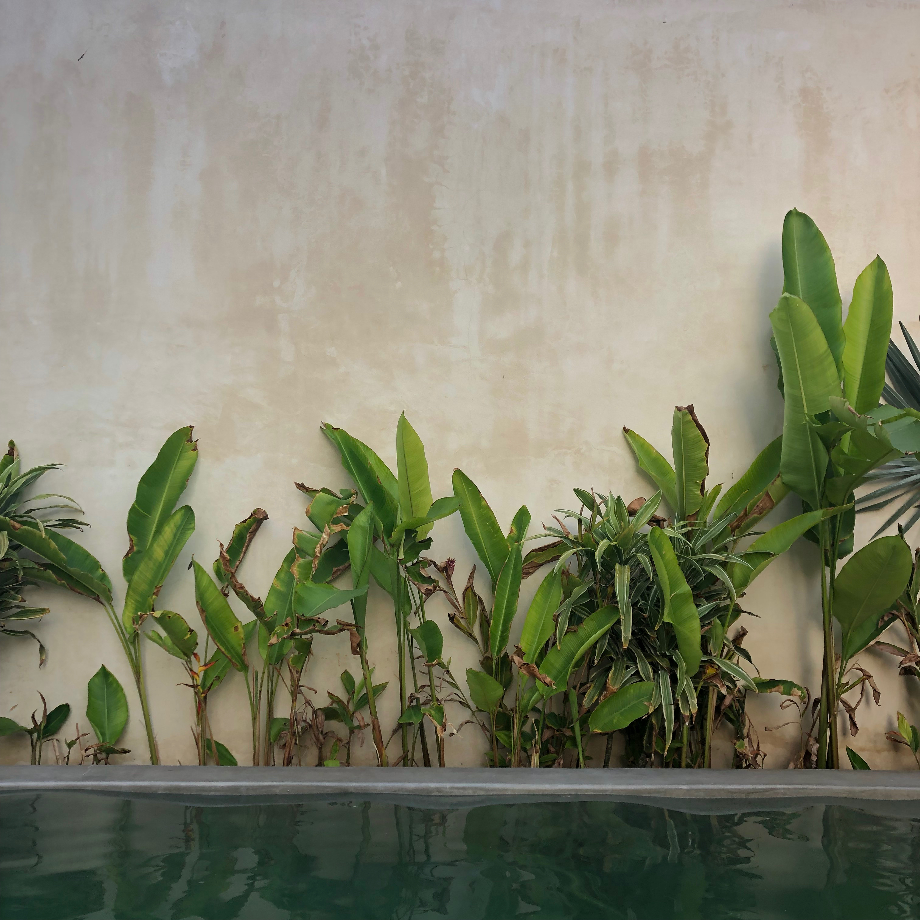 Plants growing at the edge of a pool in Cancún, Mexico.